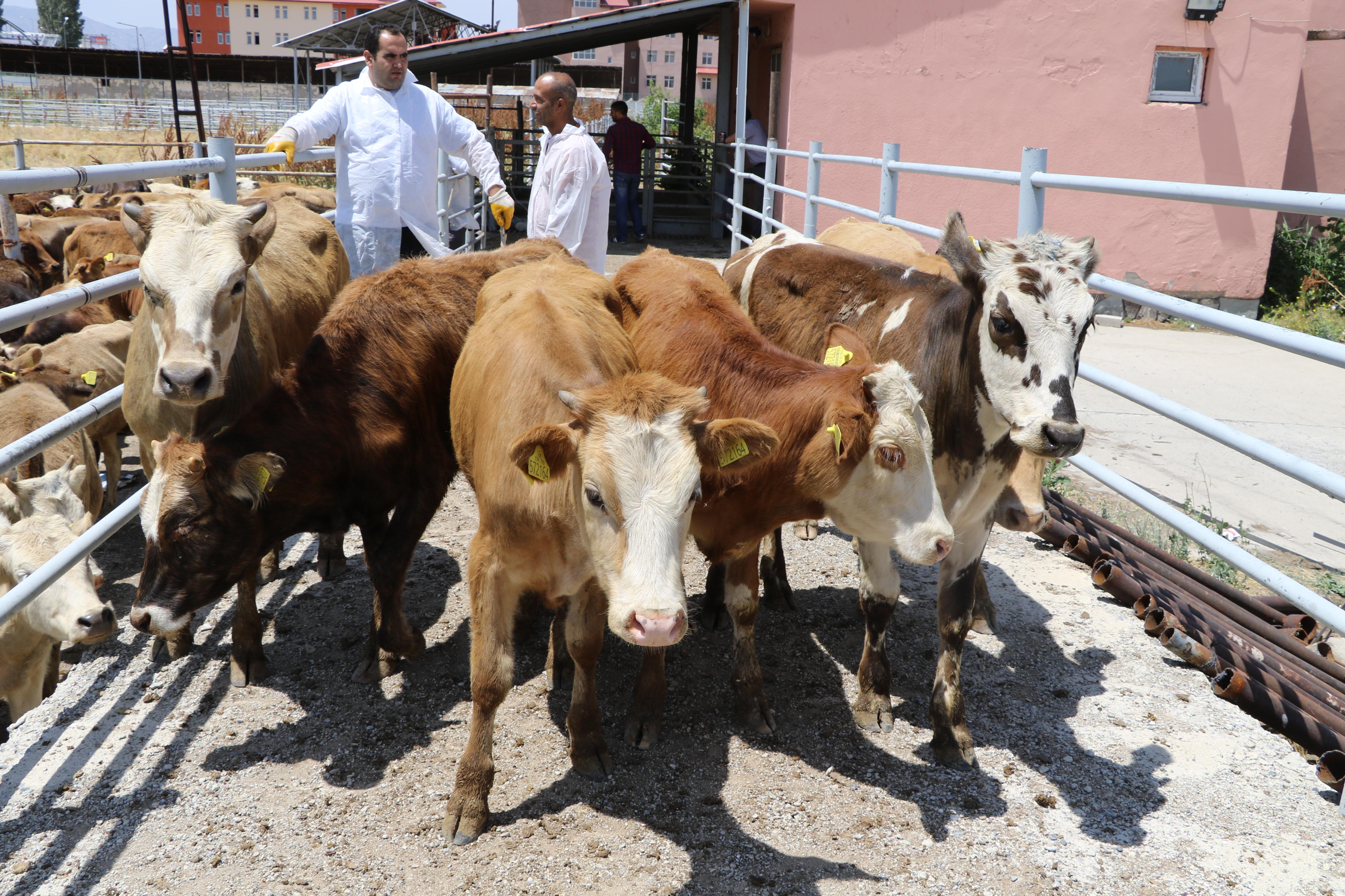 Çiftçilerimize %30 Hibeli Düve Alım Desteği Başvuruları Sonuçlandı
